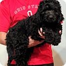 Adopt A Pet :: Hamlet
