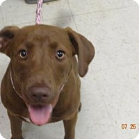 Adopt A Pet :: Antonio (Lonely Heart) - Gulfport, MS