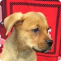 Adopt A Pet :: Sanchez - East Sparta, OH