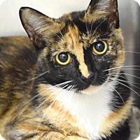 Adopt A Pet :: Caramia - Dublin, CA
