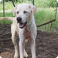 Adopt A Pet :: Fiyero - Providence, RI