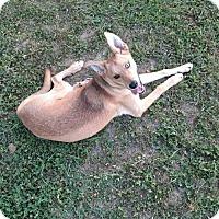 Adopt A Pet :: Nash - Bristol, VA