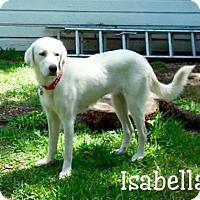 Adopt A Pet :: Isabella - Enfield, CT