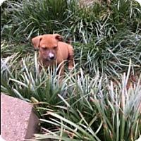Adopt A Pet :: Mango (ETAA) - Washington, DC