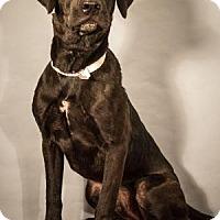 Adopt A Pet :: Harry - Berkeley Heights, NJ