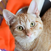 Adopt A Pet :: Sam - Killeen, TX