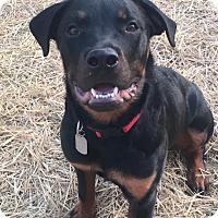 Adopt A Pet :: Flapjack - Dayton, OH
