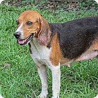 Adopt A Pet :: Marilyn - Prairieville, LA