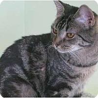 Adopt A Pet :: Janice - bloomfield, NJ