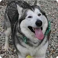Adopt A Pet :: Ayla-Adopted! - Belleville, MI