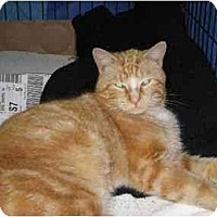 Adopt A Pet :: Dominick - Westfield, MA
