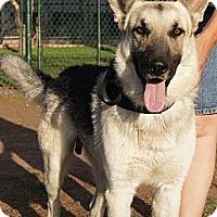 Adopt A Pet :: Kenai - Gilbert, AZ