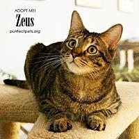 Adopt A Pet :: Zeus **HALF PRICE ADOPTION FEE** - Overland Park, KS