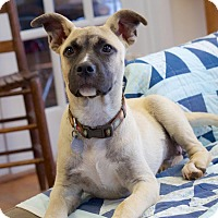 Adopt A Pet :: Hannah Bell - Knoxville, TN