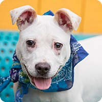 Adopt A Pet :: Honey - Nashville, TN