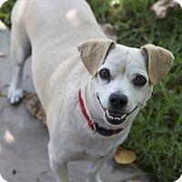 Adopt A Pet :: Nikko - Encino, CA