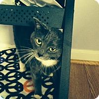 Adopt A Pet :: Stormy - Stafford, VA