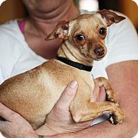 Adopt A Pet :: Petunia - Long Beach, NY