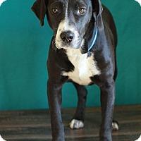 Adopt A Pet :: Rummy - Waldorf, MD