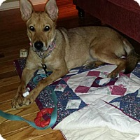 Adopt A Pet :: Roxy (fostered in PA) - Cranston, RI