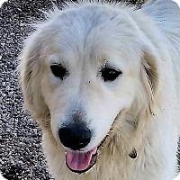 Adopt A Pet :: Bandi - Kyle, TX