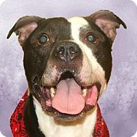Adopt A Pet :: Koda - Cincinnati, OH
