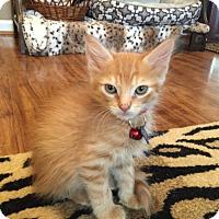 Adopt A Pet :: Bruno - Birmingham, AL