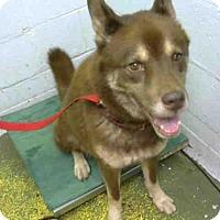 Adopt A Pet :: SUPA - Atlanta, GA