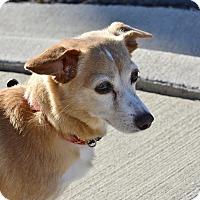 Adopt A Pet :: Tandy - Meridian, ID