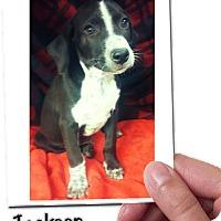 Adopt A Pet :: Jackson meet me 9/9 - Manchester, CT