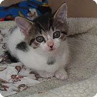 Adopt A Pet :: Jenny - Baltimore, MD
