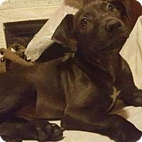 Adopt A Pet :: Oddish - Dayton, OH