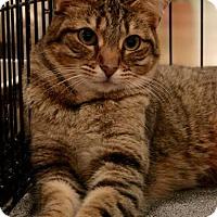 Adopt A Pet :: Ramsey - Sacramento, CA