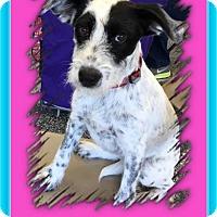 Adopt A Pet :: Jasmine - North Richland Hills, TX