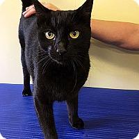 Adopt A Pet :: DANIEL - LAFAYETTE, LA