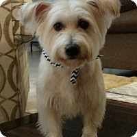 Adopt A Pet :: Rascal - Alden, NY