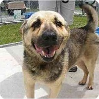 Adopt A Pet :: Herman - Alexandria, VA