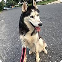 Adopt A Pet :: Leena - selden, NY