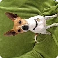 Adopt A Pet :: Brenin - Hagerstown, MD