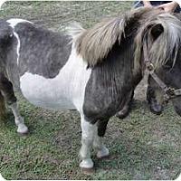 Adopt A Pet :: Deputy - Wesley Chapel, FL