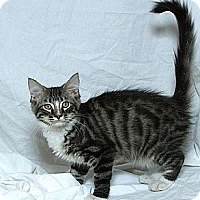 Adopt A Pet :: Oz V. - Sacramento, CA