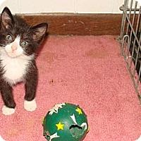 Adopt A Pet :: Bootsie - Spotsylvania, VA
