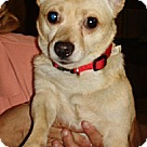 Adopt A Pet :: Billy-Courtesy Listing