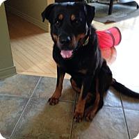 Adopt A Pet :: Ranger - Pierrefonds, QC