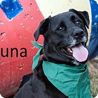 Adopt A Pet :: Luna - Hamilton, MT