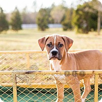 Adopt A Pet :: Hanover - Fayetteville, GA