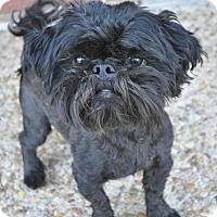 Adopt A Pet :: Huey - Atlanta, GA