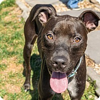 Adopt A Pet :: Champ - Lancaster, PA