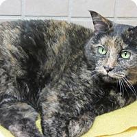 Adopt A Pet :: Sunny - Roseville, MN