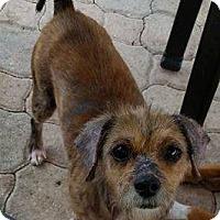 Adopt A Pet :: Grace - Ft. Lauderdale, FL